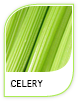 Products Celery