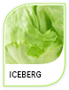 Products Iceberg
