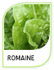Products Romaine